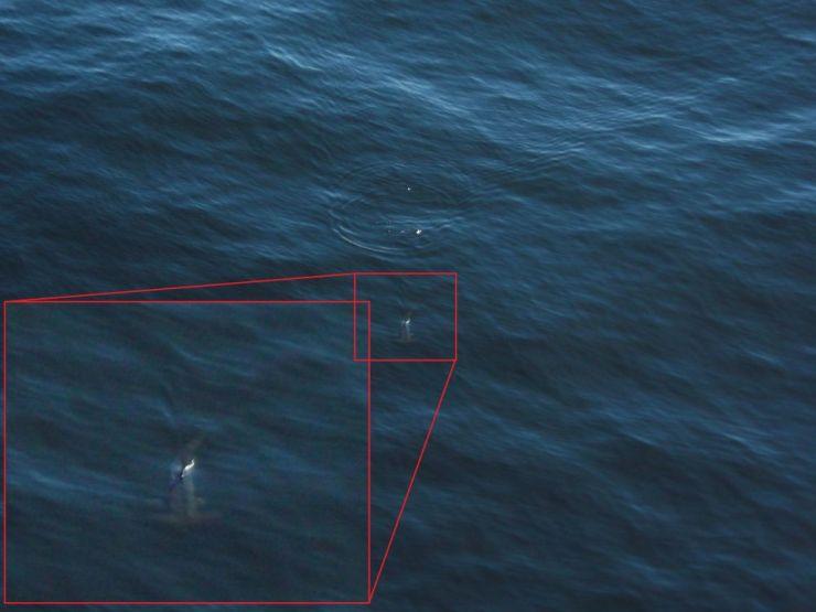 Tiburón(1)