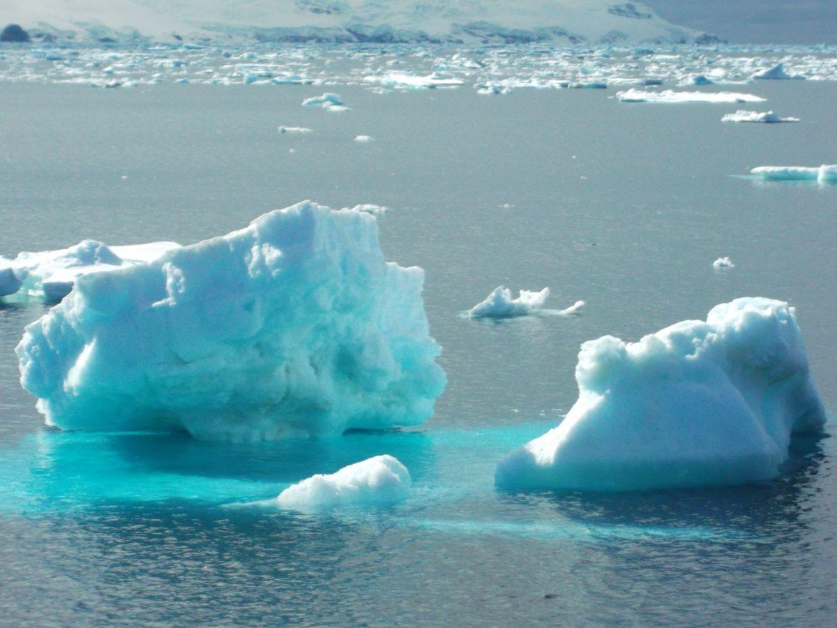 Impactos del Cambio Global en los Ecosistemas Antárticos
