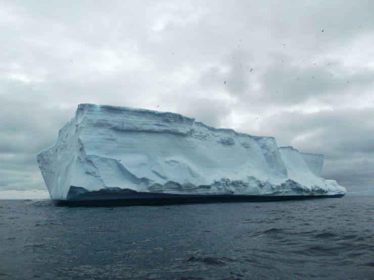 Iceberg+Pajaros