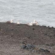 Albatros Viajeros.