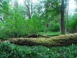 Aspecto parte arbustiva bosque patagónico
