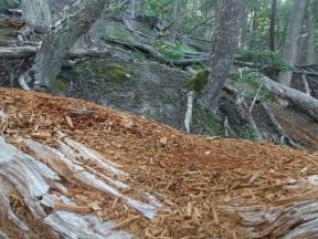 Árbol quebrado longitudinalmente
