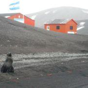 Lobo Marino en la Base Argentina.