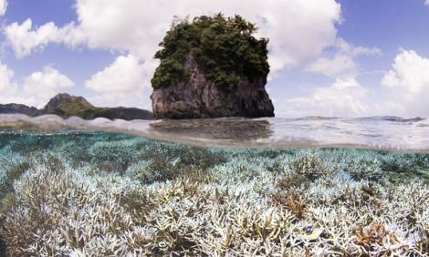 Coral después de la decoloración en Samoa. Fotografía: Catlin Seaview Survey/ AP.