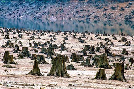 COP21_Deforestacion