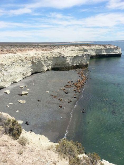 Lobos marinos en una de las calas de Península Valdés