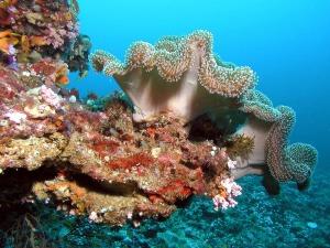 Corales en las Islas Maldivas