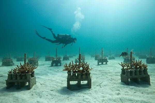guarderia de coral