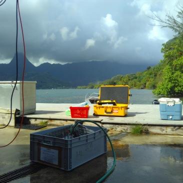 Recogiendo el material de la campaña en la isla de Moorea.